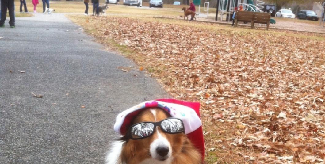 Who needs Rudolph?