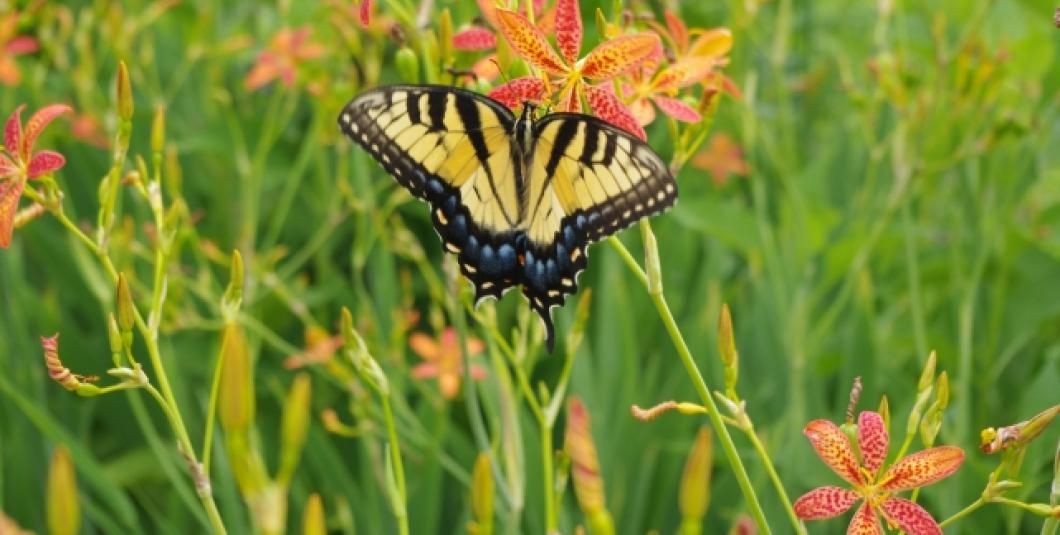 Find out what crawls, swims, and flies in our park
