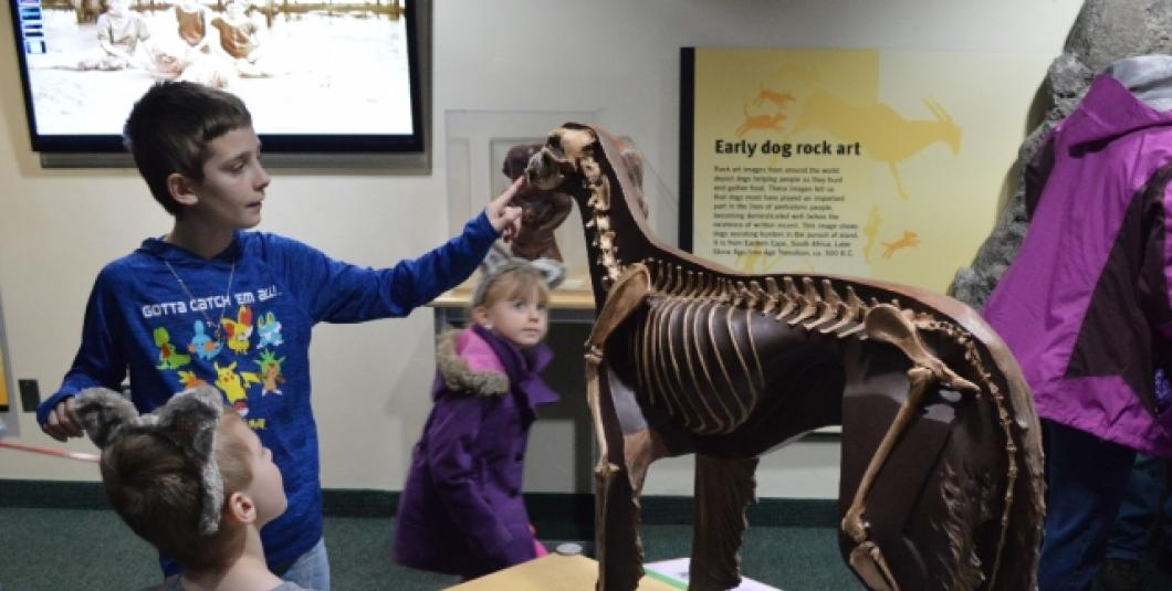 Dioramas engage and teach visitors about canines.
