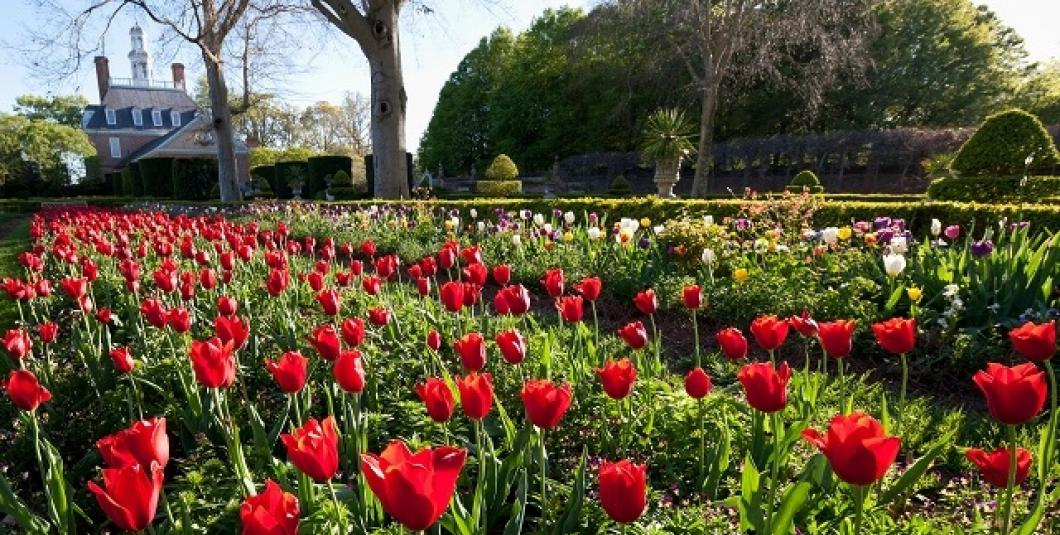 Gardens in bloom at the Governor's Palace