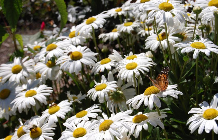 Williamsburg Botanical Gardens