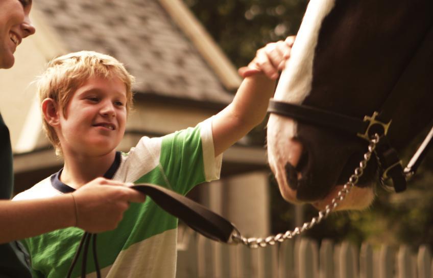 Petting a horse at Busch Gardens Williamsburg