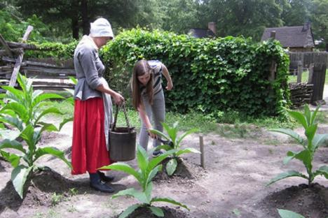 Watering tobacco at the Revolution-era farm.