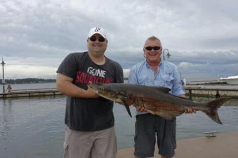 Trophy Cobia
