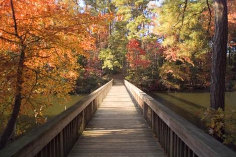 Trees on the Trail at The Mariners' Museum and Park in Newport News, VA October 22