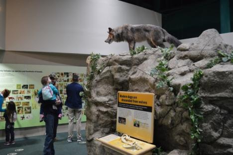 Wolf to Woof: The Story of Dogs Exhibit
