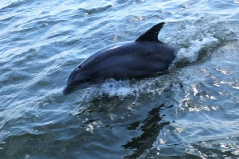 Watch dolphins frolick