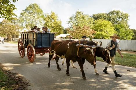 Ox Wagon Rides